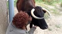 'Margarita', una vaca condenada a muerte por no tener papeles