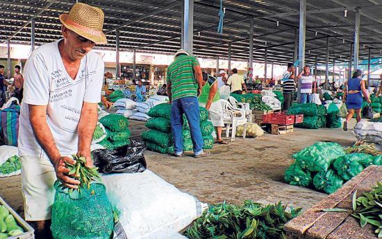 Precios cambian en los mercados con la salida y venta de la cosecha