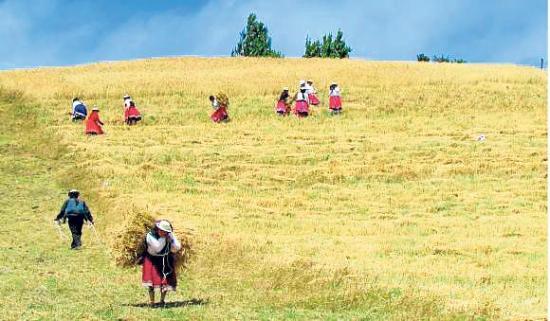 La producción de trigo no abastece al mercado