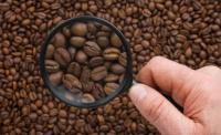 Un estudio prueba que la cafeína ayuda a adelgazar a los ratones