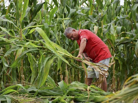 Contrabando, plaga de la agricultura