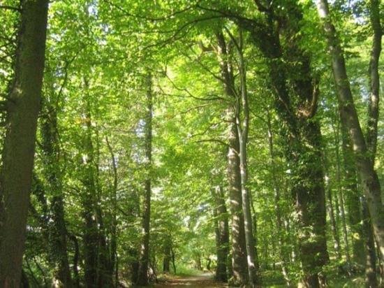 Crecen 10 mil árboles  en una zona desértica