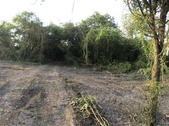 """""""No hubo daño a la naturaleza"""", dice dueña de terreno en 'La Tomatera'"""