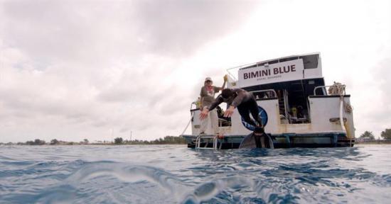 Michael Phelps vivió el 'gran desafío' de nadar contra un tiburón blanco