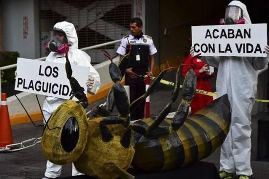 Denuncian con abejas muertas el peligro de plaguicidas en cultivos mexicanos