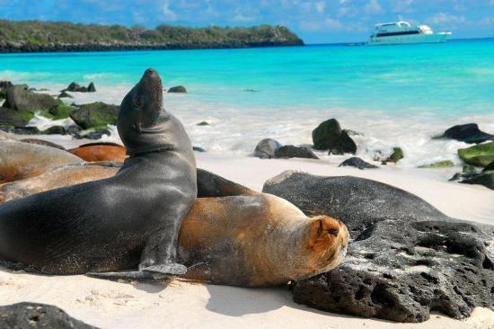 El 95% de especies de Galápagos está en 'buen estado de conservación'