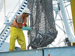 Pescadores temen estar 4 meses sin atún