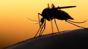 Científicos desarrollan un posible inhibidor del virus del zika