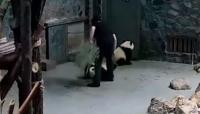 Vídeo que muestra el maltrato a dos pequeños pandas causa indignación en la web