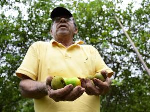 El limón alcanza un precio 'histórico': un saco cuesta 65 dólares