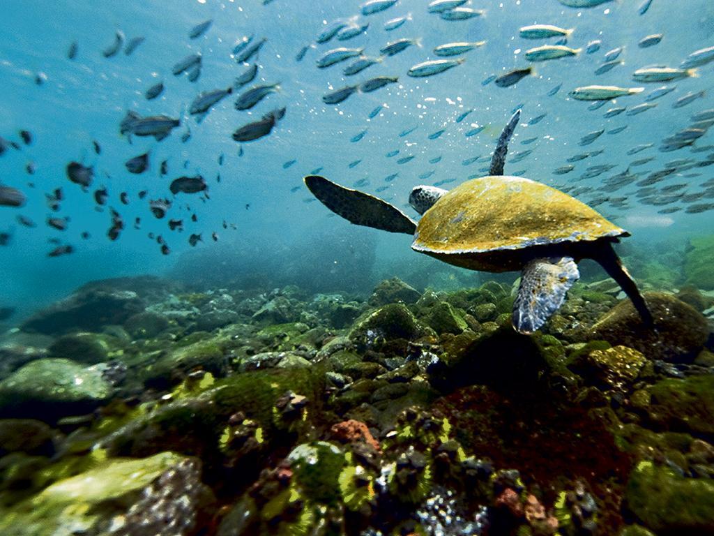 Resultado de imagen para islas galapagos