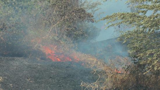 Incendio forestal desata alarma en la vía Portoviejo-Manta