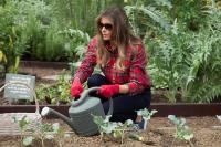 Melania Trump continúa la tradicional siembra en el huerto de la Casa Blanca
