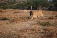 Hay que cambiar las prácticas de ganadería, recomienda un experto