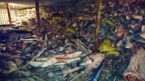 El barco chino incautado en Galápagos tenía 600 toneladas de pesca