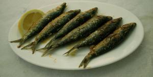 Expertos piden prohibir por completo la pesca de sardinas