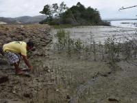 Reforestan  el estuario