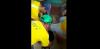Despiden y denuncian a trabajadores por maltratar a un perro en Costa Rica