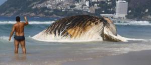 Ballena aparece muerta en la turística playa de Ipanema en Río de Janeiro