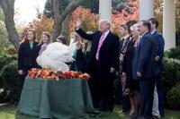 Trump cumple con la tradición del indulto al pavo antes de Acción de Gracias