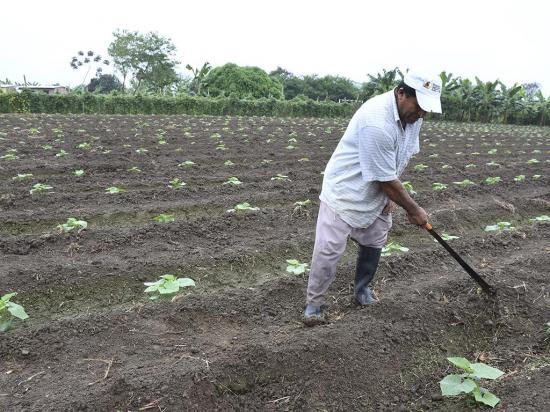 Primeras lluvias animan a los agricultores