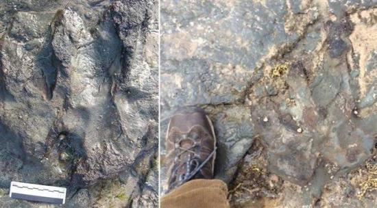 Destruyen con un martillo una huella de dinosaurio de 115 millones de años