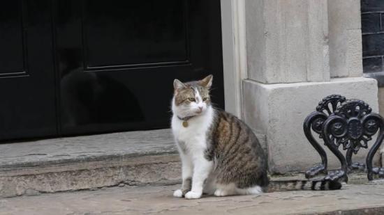 El Ministerio de Exteriores francés adopta dos gatos para acabar con ratones