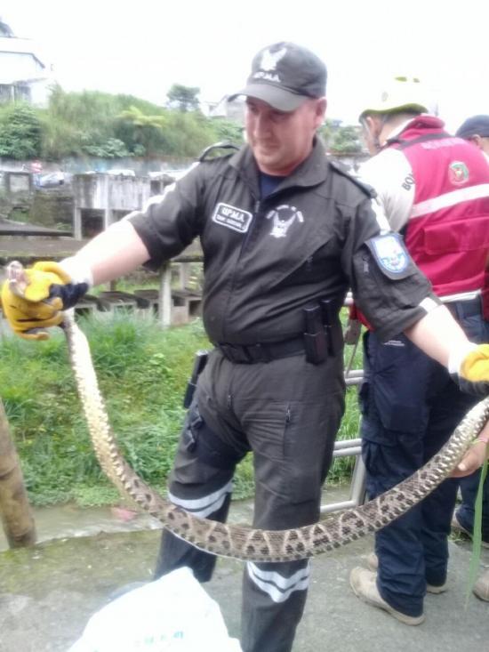 Serpiente causó temor en Las Lavanderías