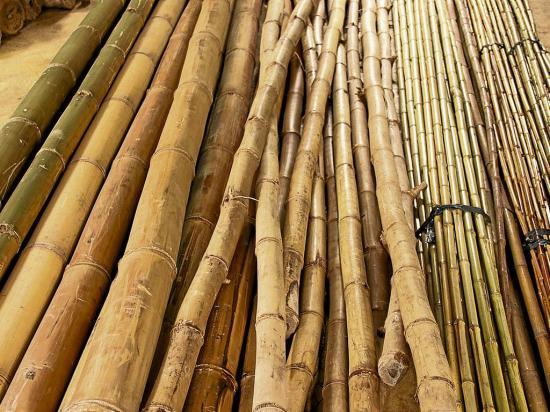 La fuerza del bambú