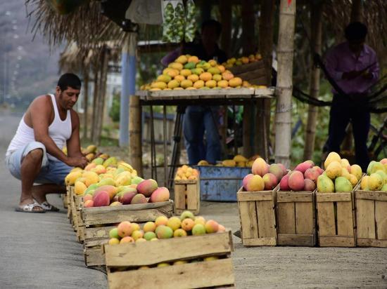 Los mangos de la vía les sonríen  a los viajeros