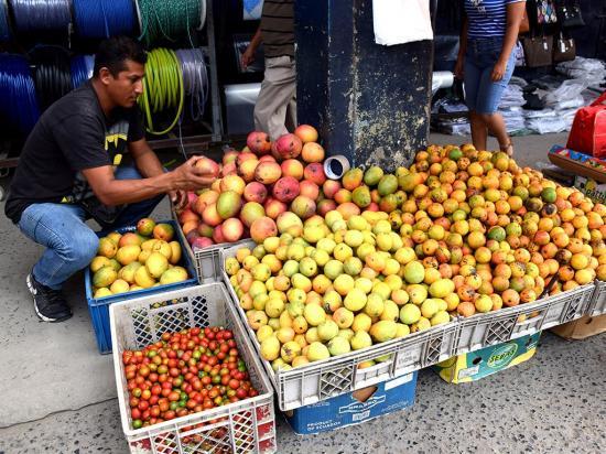 En la provincia se comercializan hasta 60 variedades de mango