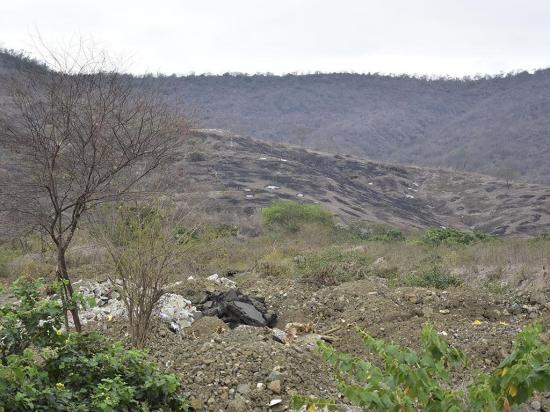 En área deforestada de El Florón se sembrarán diez mil plantas