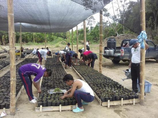 4 mil hectáreas serán reforestadas