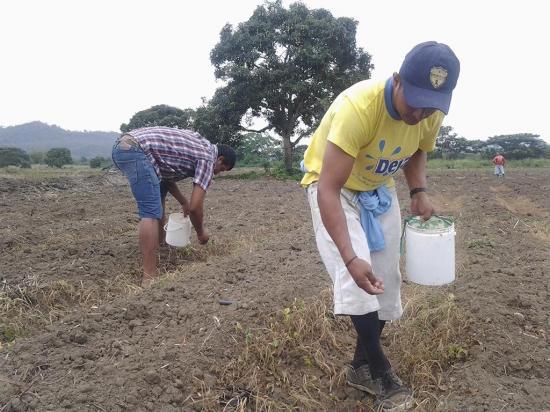 Fortalecerán el sector ganadero y agrícola en el 2018