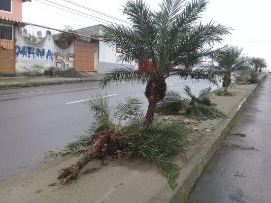 Buscan al responsable  de dañar las plantas  del parterre