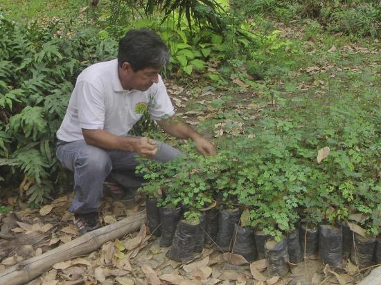 En el Jardín Universitario aún hay plantas de  cascol para llevar
