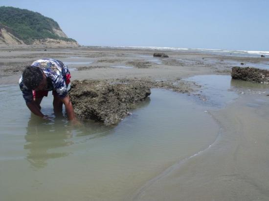 Capturan pulpos por el aguaje