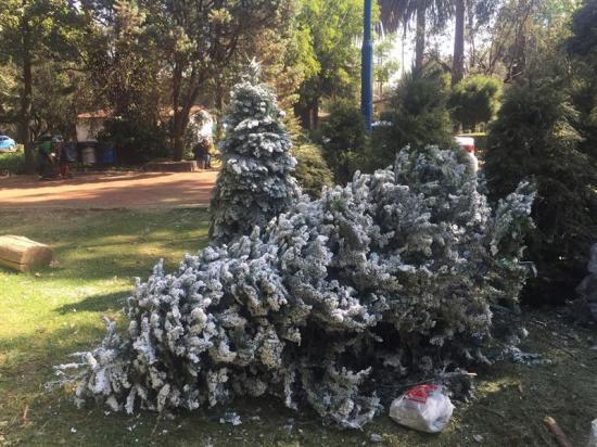 Ciudad de México espera reciclar hasta 10.000 árboles de Navidad