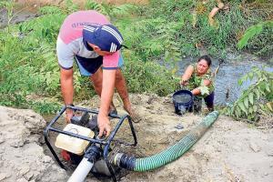 Falta agua para los cultivos de arroz