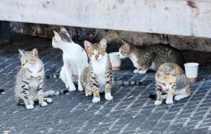 Estiman que medio millón de mascotas son abandonadas al año en México