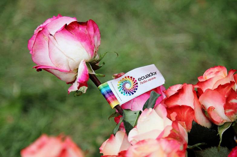 Unas 15.000 toneladas de flores saldrán desde Quito al mundo por San ...