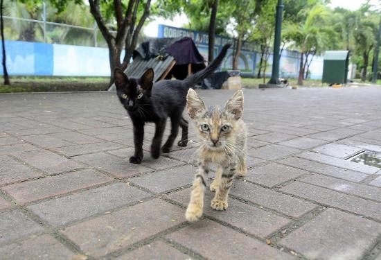 Rescatistas preocupados porque siguen abandonando gatos en El Mamey