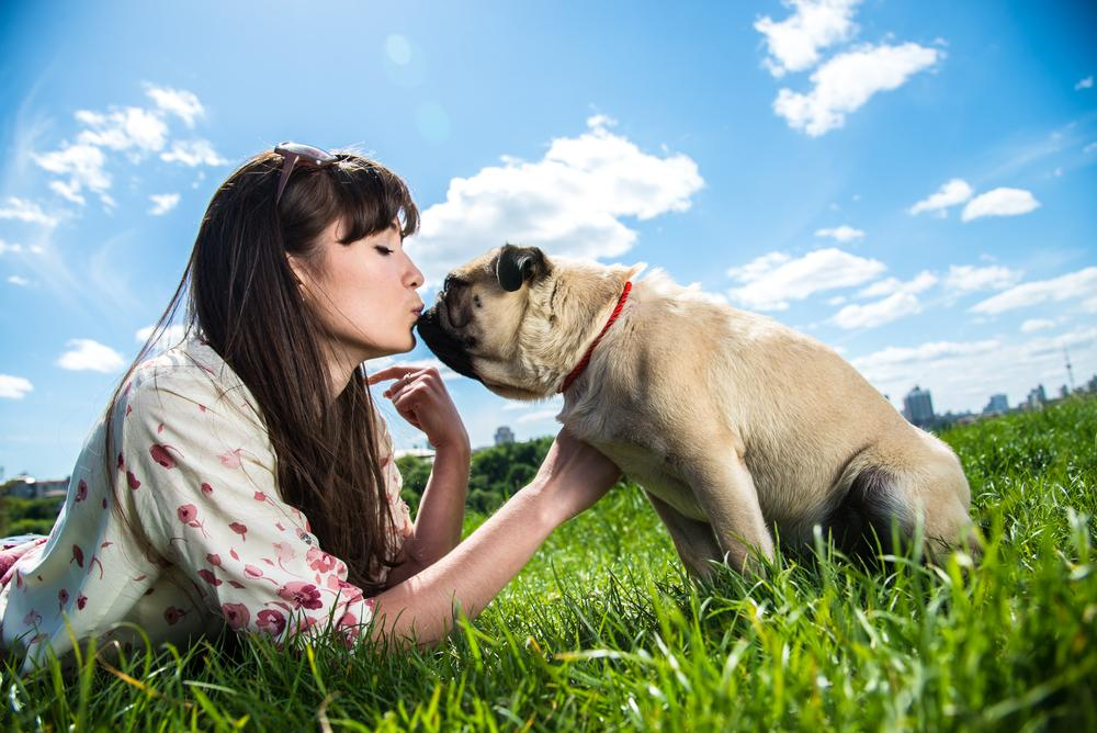 Solteros pueden tener citas de San Valentín con perros y gatos en Filipinas