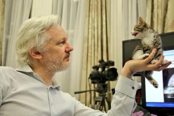 ¿Por qué el gato de Julian Assange se roba la atención en medio de sus líos diplomáticos?