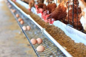 Francia prohibirá a partir de 2022 la venta de huevos de gallinas criadas en jaulas