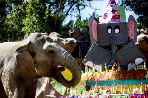 Elefanta guatemalteca Trompita celebra su 57 cumpleaños con barrito de júbilo