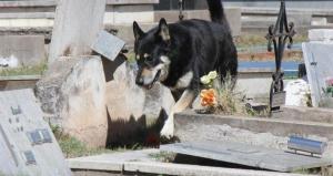 Muere el perro que veló durante una década la tumba de su amo en Argentina