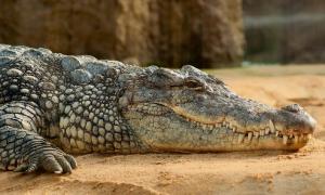 Un pescador muere devorado por un cocodrilo en una isla de Filipinas