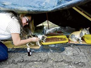 Gatos deberán irse del parque El Mamey