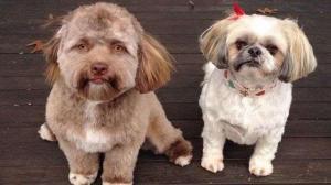 Un perro con cara de humano sorprende al mundo